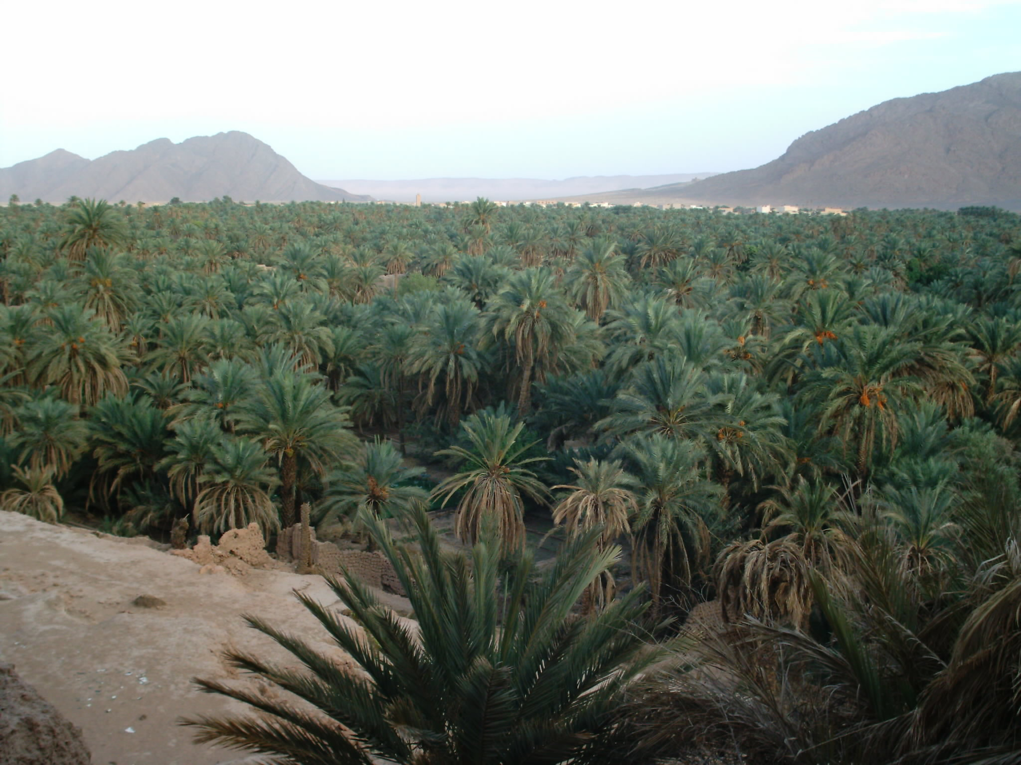 اقصى المغرب °ˆ~*¤®§(*§--فكيك مدينة القصور zoom_figuig_azro.jpg